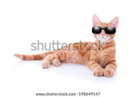 Cool party cat or summer holiday vacation cat in sunglasses - stock photo