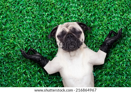 cool pug dog holding a blank placard or blackboard on the grass or meadow in the park wearing fancy sunglasses - stock photo