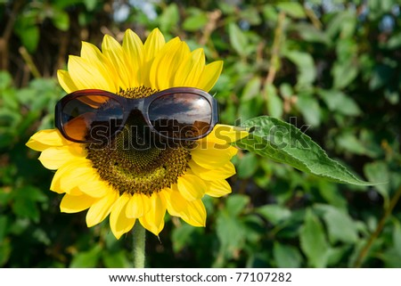 Cool Sunflower - stock photo