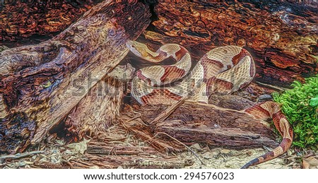 Copperhead snake by rotten log, digital oil painting - stock photo