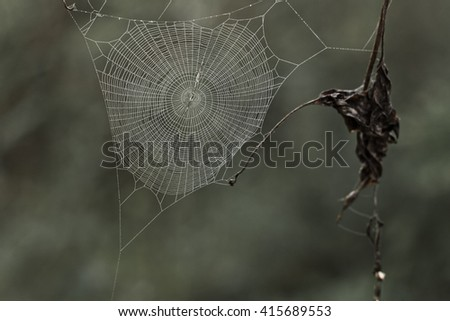 Copweb with small dews during fog - stock photo