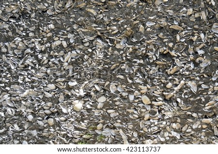 Coquina Shells wall background at historic St. Augustine, Florida - stock photo