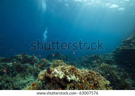 coral and fish - stock photo