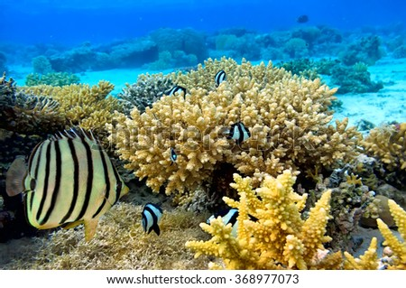 Coral and fish in the Red Sea. Egypt. - stock photo