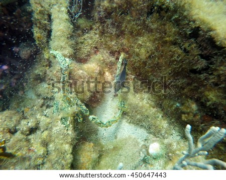 Coral and fish on the wreck of the Copenhagen off the coast of Pompano Beach, Fort Lauderdale, Florida - stock photo