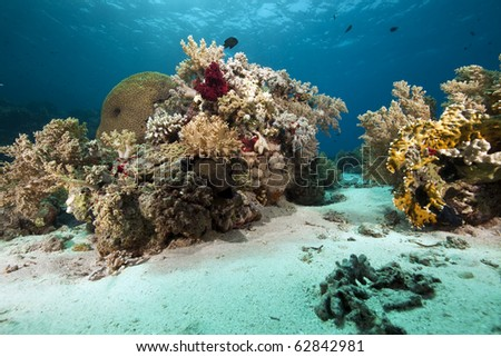 coral and ocean - stock photo