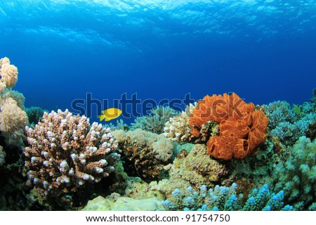Coral and Sponges in the Sea - stock photo