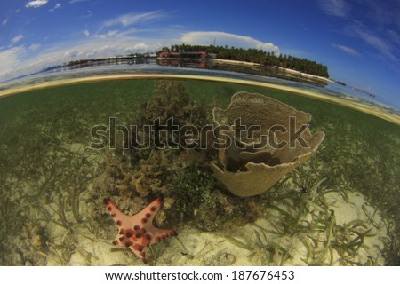Coral and Tropical Island - stock photo