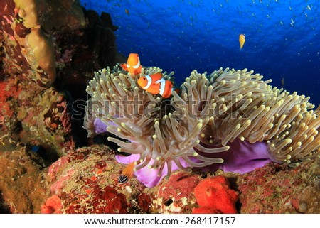 Coral, Anemone and Clownfish underwater - stock photo