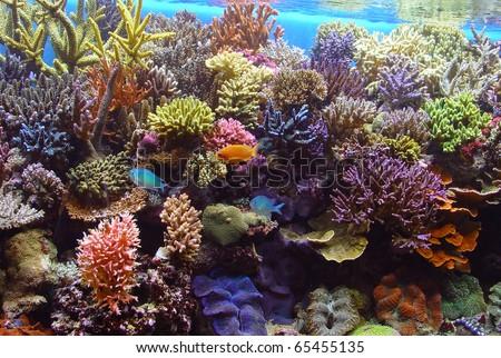 coral aquarium fish Aquarium corals reef - stock photo