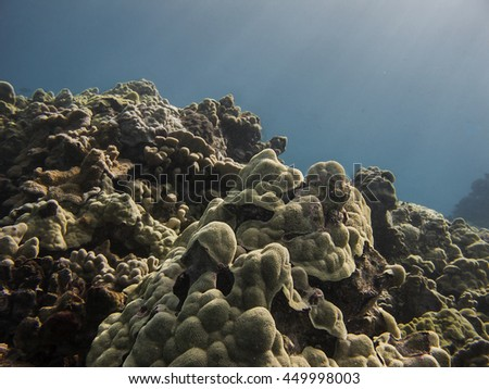 Coral at the bottom on Pacific ocean on the hawaii shore - stock photo