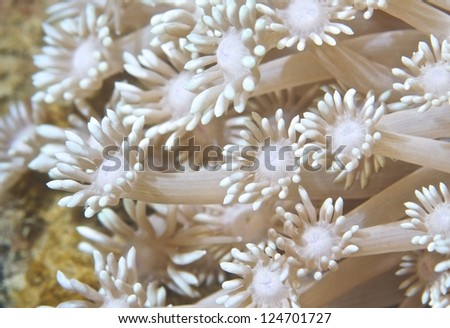Coral close up, Northeast Taiwan - stock photo