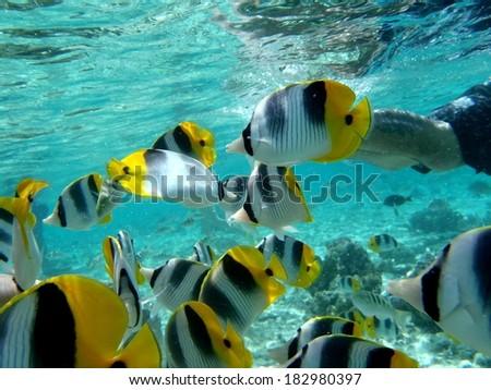 Coral garden, Taara island. french polynesia - stock photo