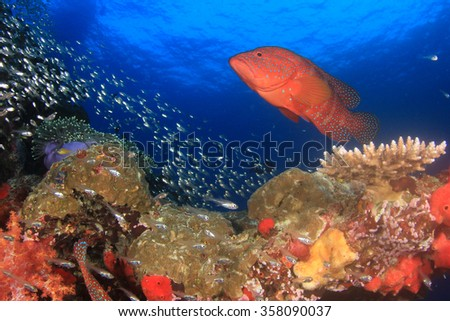Coral Grouper fish - stock photo