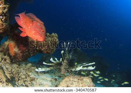 Coral Grouper fish and lionfish - stock photo