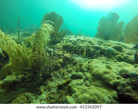 Coral growing on the wreck of the Copenhagen off the coast of Pompano Beach, Fort Lauderdale, Florida - stock photo