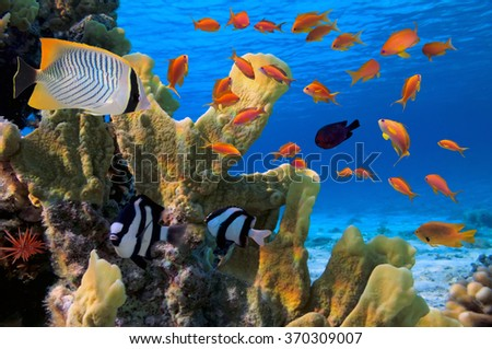 Coral landscape. - stock photo