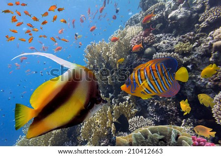 Coral landscape.Red Sea, Egypt. - stock photo