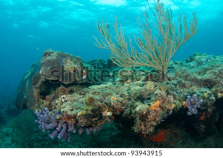 Coral Ledge in early moring. - stock photo