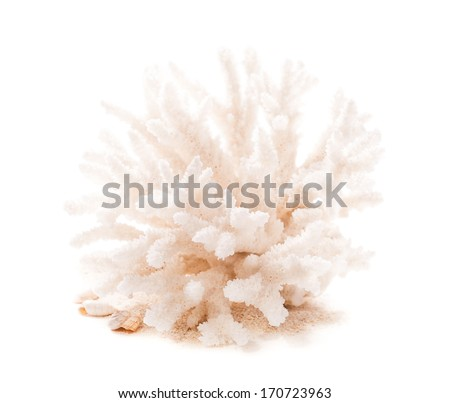 Coral on the sand - stock photo