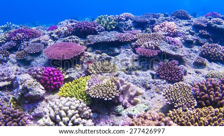 coral reef - stock photo