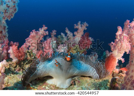 Coral reef and fish in sea - stock photo