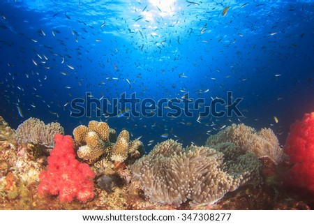 Coral reef and fish underwater in sea ocean - stock photo