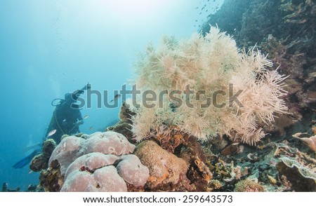 Coral reef and fishes with divers background at the colorful tropical sea - stock photo