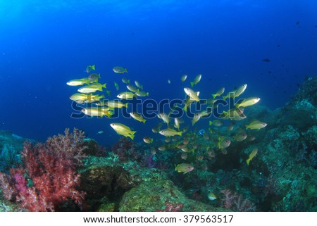 Coral Reef and Snappers fish - stock photo