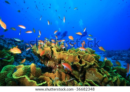 Coral Reef and Tropical Fish with Scuba Divers in the background - stock photo
