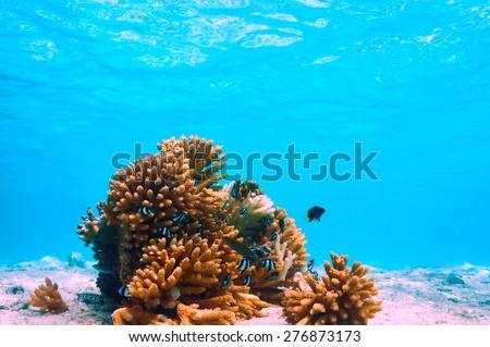 Coral reef at South Ari Atoll, Maldives - stock photo