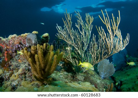 Coral Reef composition with fish aggregation. Picture taken in Broward County, Florida. - stock photo