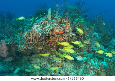 Coral Reef Composition with fish aggregation picture taken in Broward County, Florida. - stock photo