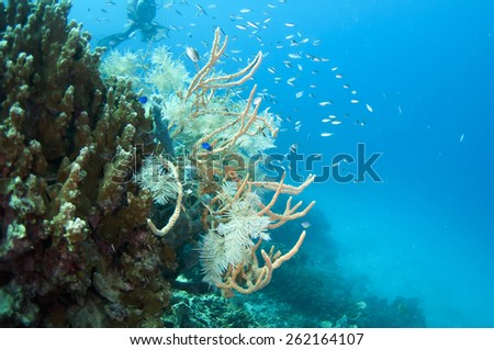Coral reef, Coron , Palawan, Philippines. - stock photo