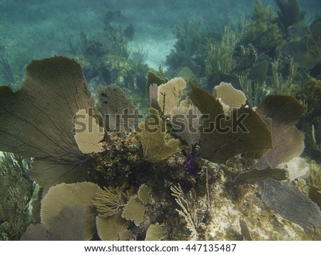 Coral reef home to a great biodiversity - stock photo