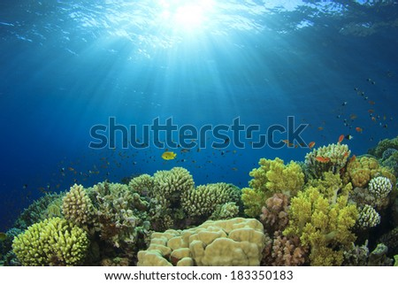 Coral Reef in Ocean - stock photo
