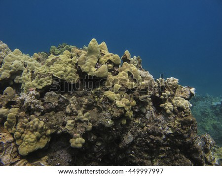 coral reef in the pacific ocean - stock photo