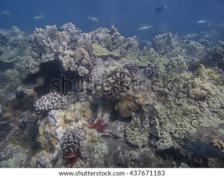 coral reef in the pacific ocean, with fish and sea orchin - stock photo