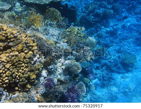 Coral reef of Red Sea - stock photo