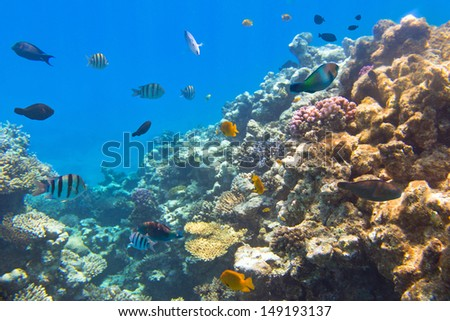Coral reef of Red Sea with tropical fishes, Egypt - stock photo
