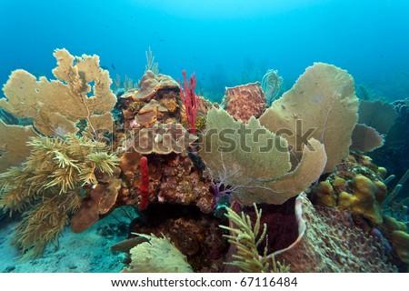 Coral reef off the coast of Roatan honduras - stock photo