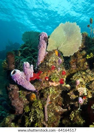 Coral reef off the coast of Rpatan Honduras - stock photo
