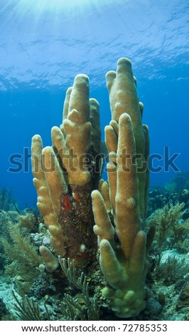 Coral reef  off the coast of the Craibbean island, Roatan - stock photo