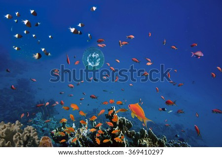 Coral reef, Red Sea, Egypt - stock photo