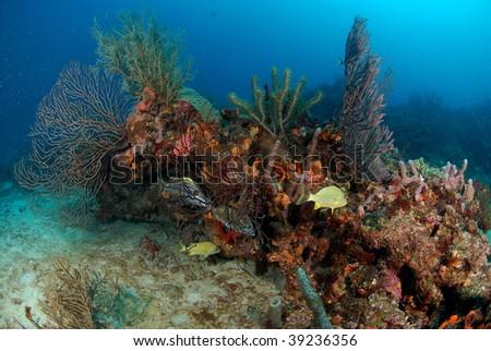 coral reef scene - stock photo