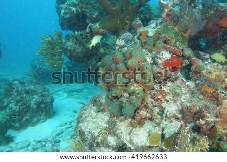 Coral reef underwater - stock photo