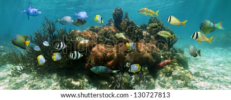 Coral reef underwater panorama with school of colorful tropical fish - stock photo