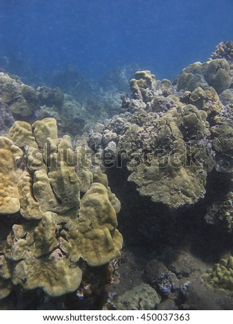 Coral reef wall at the bottom on Pacific ocean on the hawaii shore - stock photo