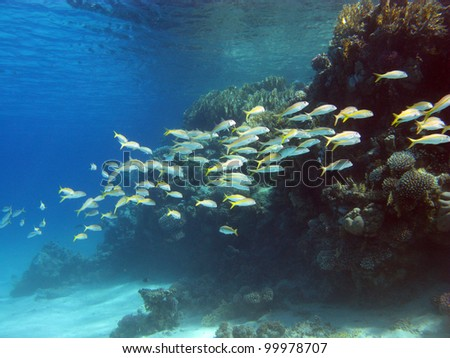 coral reef with exotic fishes - stock photo