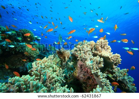 Coral Reef with Lionfish and other tropical fishes - stock photo